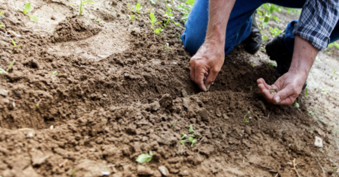 Tips for Staying Healthy While Gardening image